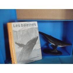 Baleines et autres rorquals